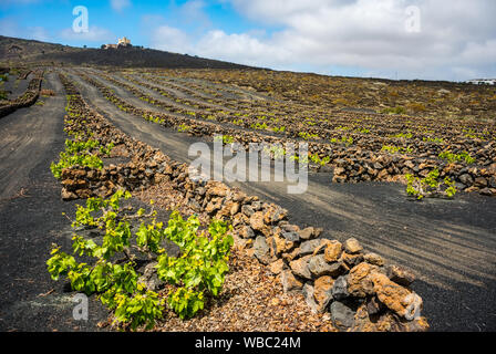 Stunning landscape with volcanic vineyards. Traditional wine production of Lanzarote. Canary Islands. Spain - Stock Photo