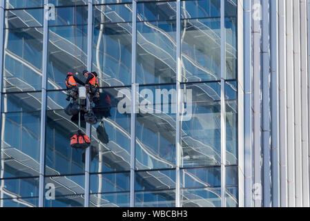 Two me rappelling or abseiling down and working on a glass curtain on the outside of a new multi story office tower in Sydney's Parramatta - Stock Photo