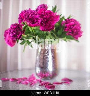 Bouquet of dark pink peonies flowers in a vase