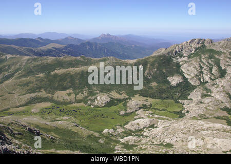 Pozzi, bog near Monte Renoso, France, Corsica - Stock Photo