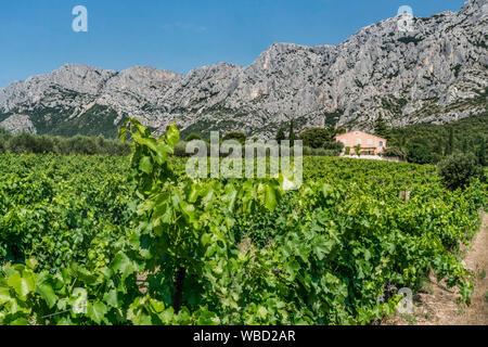 Vineyards Domaine de Saint Ser, Route Cezanne, Montagne Sainte-Victoire, Provence,  Bouches-du-Rhône, france