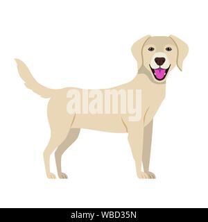 cute labrador retriever dog on white background - Stock Photo