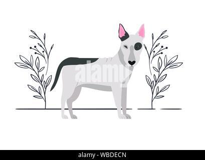 cute bull terrier dog on white background - Stock Photo