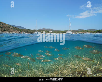Spain Costa Brava Cadaques, boats moored in Portlligat bay with fish and seagrass underwater, Mediterranean sea, split view above and below surface