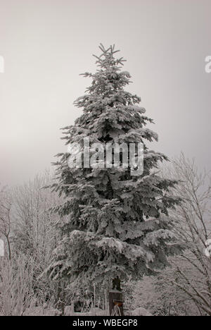 Cloudy day in the winter in Switzerland. Thick fresh snow on pine tree. Christmas backgrounds. Copy space. - Stock Photo