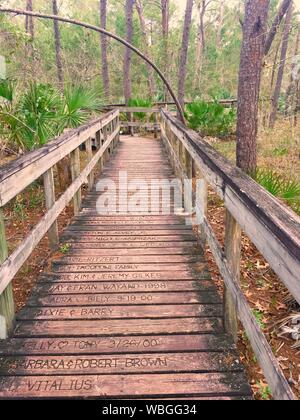 Footbridge Passing Through A Forest - Stock Photo