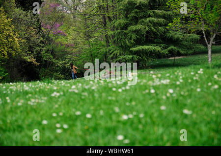 Woman Walking With Dog In Park - Stock Photo