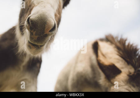Close-up Of Donkeys Against Sky - Stock Photo