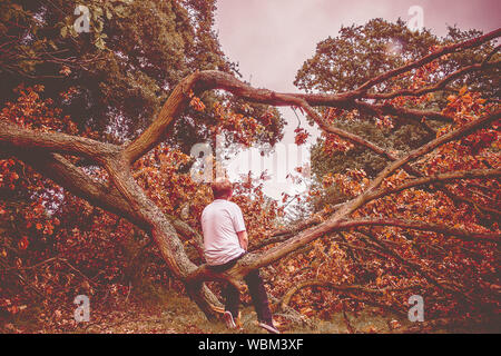 Full Length Rear View Of Boy Sitting On Fallen Tree In Forest During Autumn - Stock Photo