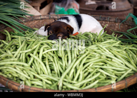 Close-up Of Dog Sleeping In Basket With Vegetables For Sale At Market - Stock Photo