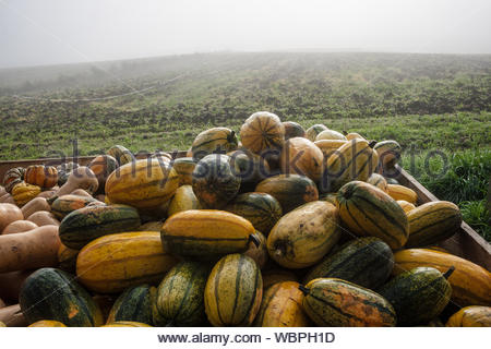 Stacked Pumpkins On Field Against Clear Sky - Stock Photo