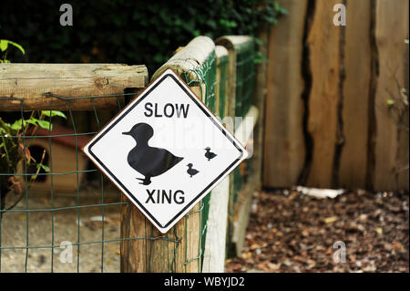 Crossing ducks sign posted on a wooden beam next to a barn. - Stock Photo