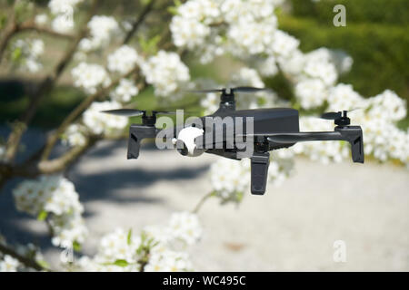 drone flying in a pear tree in the bloom - Stock Photo