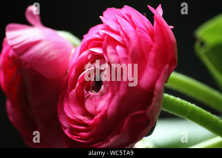 Close-up Of Pink Flower Blooming Outdoors - Stock Photo
