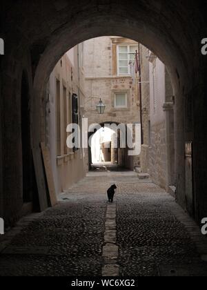 Black Cat Sitting On Footpath In City