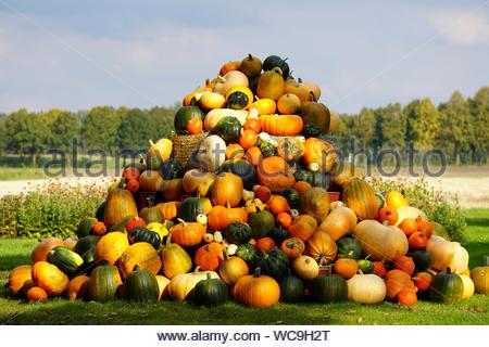 Stacked Pumpkins On Field Against Sky - Stock Photo