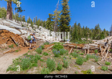 Two female hikers on a mountain trail near Pinecrest, California, in the Sierra Nevada mountains. Both women have backpacks, talking to each other. - Stock Photo