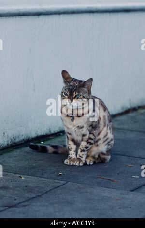 Full Length Of Egyptian Mau Sitting On Footpath - Stock Photo