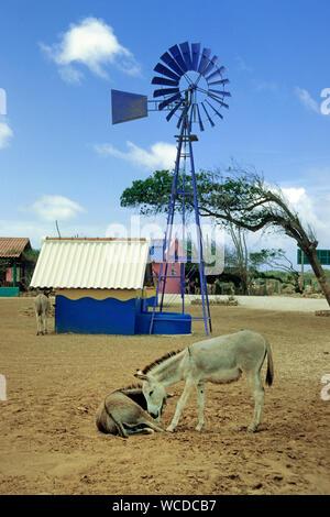 Donkey Sanctuary on Bonaire, Netherland Antilles - Stock Photo