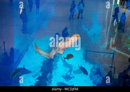 The image of Tourist at Aquarium in Dubai Mall, UAE
