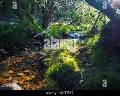 The River Manzanares. Along its course through La Pedriza, in Guadarrama Mountains National Park, Madrid, Spain. - Stock Photo