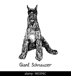 Dog of Giant Schnauzer breed sitting, hand drawn doodle sketch with inscription, isolated vector outline illustration - Stock Photo