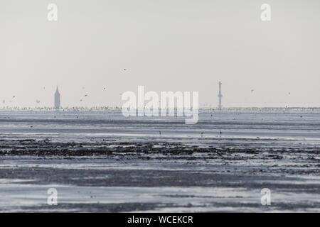 Hitzeflirren und Vögel im Watt vor Schillig - Stock Photo