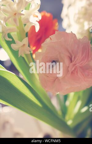 Close-up Of Fresh Rose Blooming Outdoors - Stock Photo