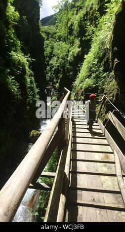Rear View Of Boy Walking On Footbridge At Forest During Sunny Day - Stock Photo