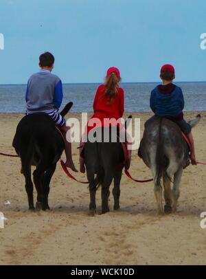 Rear View Of Siblings Riding Donkeys At Beach Against Clear Blue Sky - Stock Photo