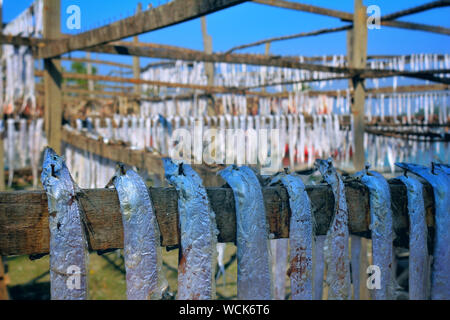 Bangladesh. 07th Jan, 2019. Dry fish industry of Bangladesh is an emerging one and it is providing a huge positive impact to the financial zone of this country. (Photo by Rajiul Huda Dipto/Pacific Press) Credit: Pacific Press Agency/Alamy Live News - Stock Photo