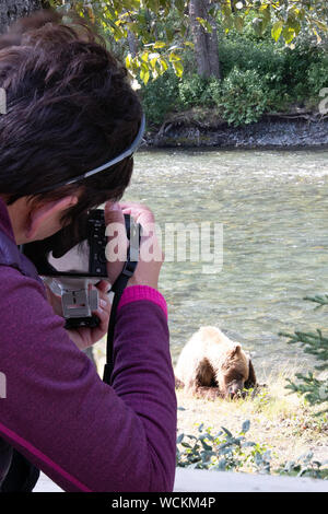 Young woman photographer lines up a shot of a Grizzly bear sitting on a river bank. Nakina River, British Columbia, Canada - Stock Photo