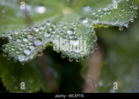 Close-up Of Water Drops On Leaf - Stock Photo
