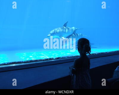 Rear View Of Girl Looking At Dolphins Swimming In Aquarium - Stock Photo