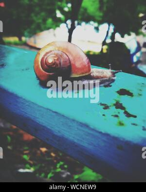 Close-up Of Snail On Fence - Stock Photo