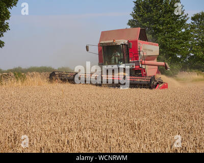 A Massey Ferguson Cerea 7278 combine harvester working in a field of winter wheat during the summer harvest period - Stock Photo