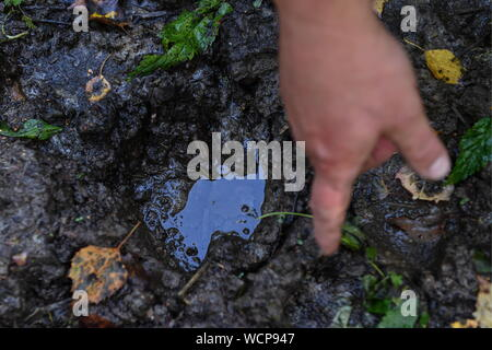 ALTAI TERRITORY, RUSSIA - AUGUST 28, 2019: A forest ranger points to an elk footprint in a protected area of taiga managed by KBU Altaipriroda in Togul District of Russia's Altai Territory, which is to become part of a protected area under the working name of Togul National Park; according to the Russian government's project Ekologia (Ecology), the proposed national park is to be established by 2024 and to include parts of Zarinsk District, Togul District, and Yeltsovka District of the Altai Territory, with a total area of over 160 hectares. Kirill Kukhmar/TASS - Stock Photo