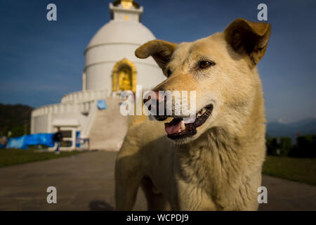 Close-up Of Dog Against Temple - Stock Photo