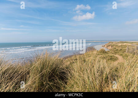 View along Saunton sands from the sand dunes with marram grass in the foreground - Stock Photo