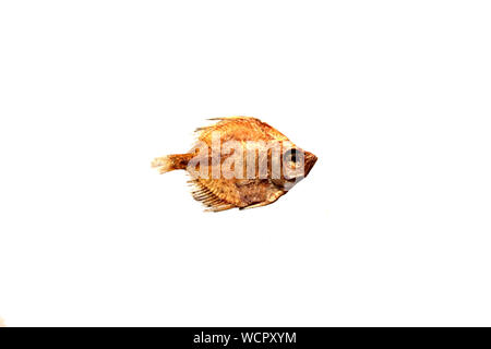 Close-up Of Fish Against White Background - Stock Photo