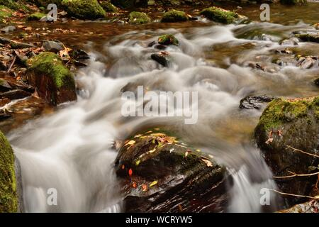 High Angle View Stream In Forest - Stock Photo