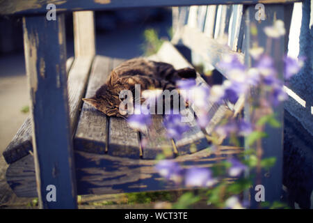 A gray cat is chilling on a wooden bench outdoors - Stock Photo