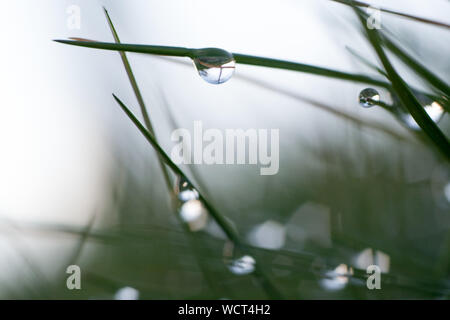 Close-up Of Water Drops On Flower - Stock Photo