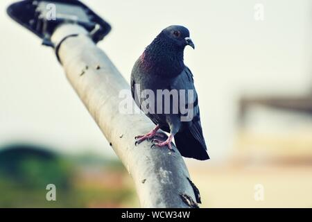 Bird Perching On Lamp Post - Stock Photo