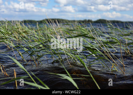 Wind blowing in the reed at blue lake - Stock Photo