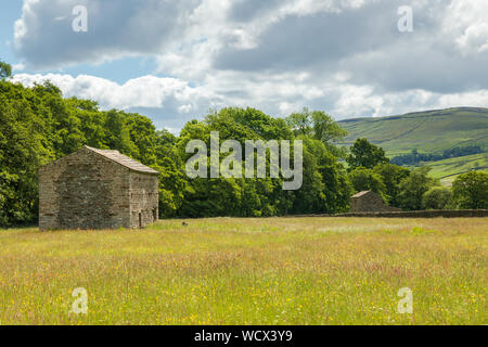 Field barn near Muker in the Muker Meadows in Swaledale.  The stone barn is surrounded by buttercups in a hay meadow.