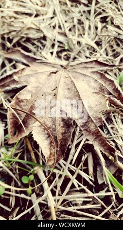 Close-up Of Dried Maple Leaf Fallen On Ground - Stock Photo