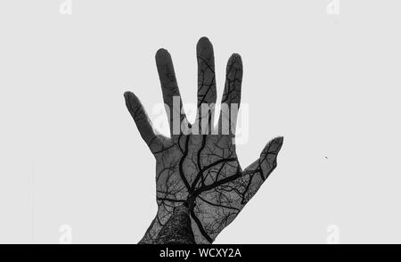 Digital Composite Image Of Bare Tree And Hand Against White Background - Stock Photo