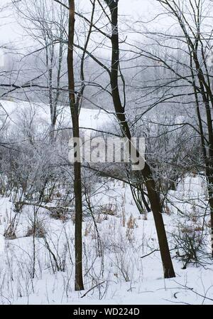 Bare Trees And Dried Plants On Snowfield - Stock Photo