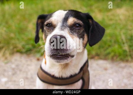 love dogs - Stock Photo